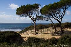 canon-3727-551 (gianfry-58) Tags: sardegna ca alberi canon eos italia mare ngc spiaggia pineta efs1785f456isusm quartusantelena 60d lightroom4 me2youphotographylevel2 me2youphotographylevel3 me2youphotographylevel1 me2youphotographylevel4 gianfrancoatzei flickr2013