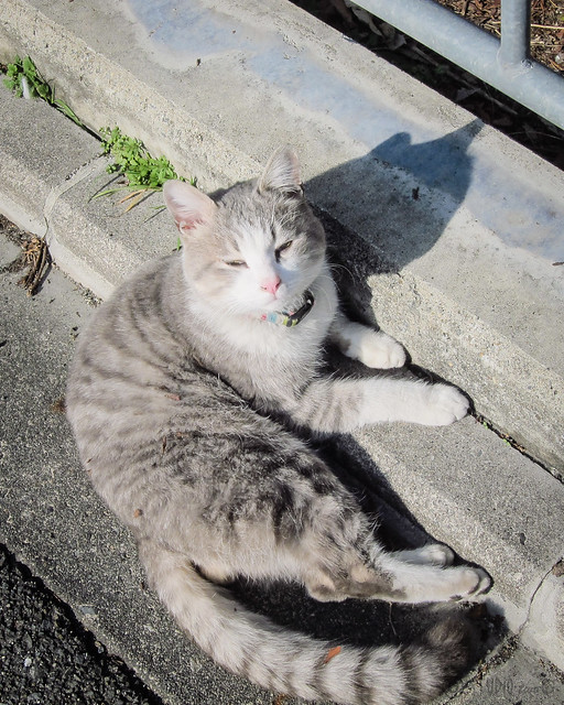 Today's Cat@2013-02-03