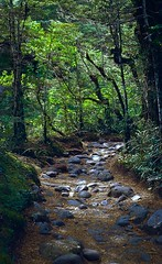 (emilyjasper) Tags: travel newzealand film 35mm photography nikon fuji contemporary ishootfilm scan explore nz transparency epson fujifilm filmisnotdead emilyjasper