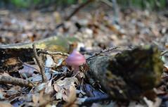 Mushroom (Bjrn O) Tags: pilz pilze mushrooms herbst autumn wald mushroom makro macro closeup close tiefenschrfe schrfentiefe
