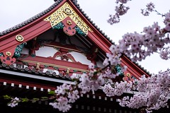 Sensoji XIII (Douguerreotype) Tags: city red cherryblossom blossom roof buddhist buildings pink architecture cherry petals gold japan tokyo shrine temple sakura