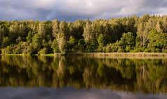 The Natural Mirror (modestmoze) Tags: mirror natural nature trees treeline outside outdoors lithuania 2016 500px water lake waves calm relaxing relax sky clouds white blue grey summer august line shore middle yellow green brown shadows black woods forest
