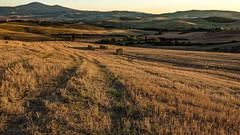Field III (marco soraperra) Tags: nikon nikkor italy nature sunset landscape warm light shadow valdorcia toscana tuscany italia field tree