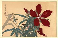 Swamp rose mallow (Japanese Flower and Bird Art) Tags: flower swamp rose mallow hibiscus coccineus malvaceae rakusan tsuchiya nihonga woodblock print japan japanese art readercollection