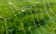 """""""When the words appeared, everyone said they were a miracle. But nobody pointed out that the web itself is a miracle.."""" (just call me Mr Lucky) Tags: cattailmarsh spiderweb morningdew droplets web dew phonography"""
