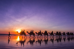 I'll never be your beast of burden (jenni - away, on/off until October) Tags: australia australiansunset australianbeach cablebeach camels sunset westernaustralia
