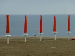 P1000001k (gzammarchi) Tags: italia paesaggio natura mare ravenna portocorsini ombrellone colore arancione animale gabbiano