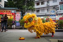Lion dance  - TIONG BAHRU QI TIAN GONG TEMPLE (waex99) Tags: 2016 bahru gong leica m262 qi singapore summaron summilux temple tian tiong tiongbahruqitiangongtemple chinese religion tradition dance lion