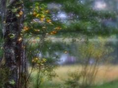 Fyllingsdalen, Norway - Fallscape (Anne Worner) Tags: anneworner em5olympus lensbaby reflections autumn birch diffuse fall grass lake landscape marsh oldgrowthtrees scenery season soft treest velvet56 warm water