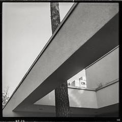 Built around the tree (*altglas*) Tags: architektur architecture tree baum urbannature mediumformat mittelformat 6x6 120 film analog expired expiredfilm orwo np20 bw monochrome zeiss superikonta 53316 rodinal