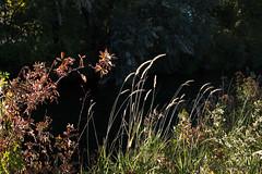 Grass n Trees (joneskevin556) Tags: fall colors tress sun idaho grass