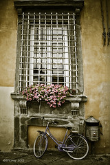 Lucca Framed (Steve Corey) Tags: travel windows italy france architecture nice europa lucca shutters oldworldcharm oldeuopeanbuildings
