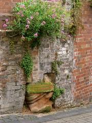 Wall textures, Cartway, Bridgnorth, Shropshire (wonky knee) Tags: texture wall sandstone wand mur ivyleavedtoadflax bridgnorth valerian oldbricks interestingwall cartway ukshropshire