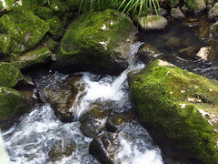 Water & Moss! (christineNZ63.2012) Tags: newzealand water canon waterfall moss rocks powershot northisland lichen slime northland whangarei babbling whangareifalls babblingbrook sx40 whangareiscenicreserve