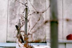 barbed wire (SOVA5) Tags: film fence rust barbedwire gifu nikkor50mm14 fujicolorsuperiaxtra400 nikonnewfm2