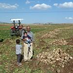 "Harvesting sugarbeets <a style=""margin-left:10px; font-size:0.8em;"" href=""http://www.flickr.com/photos/59134591@N00/8094442763/"" target=""_blank"">@flickr</a>"
