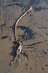 20120908-172006 (NickTheBatMan) Tags: sea seaweed beach water sand seacoal