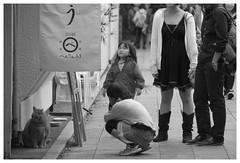 Bentenrou (Delytayan Third) Tags: bw japan cat  enoshima  kanagawa
