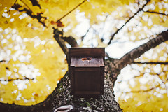 Day 296/365: Birdhouse {Explored} (jennydasdesign) Tags: autumn tree fall nature leaves yellow dof bokeh grain birdhouse lookingup 365 hst 2012 project365 365days explored fgelholk sonydslra300 dt50mmf18sam sickofthisbadweather