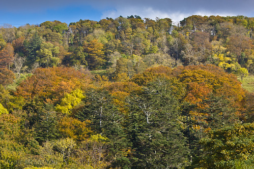 Autumn Colours, Largs
