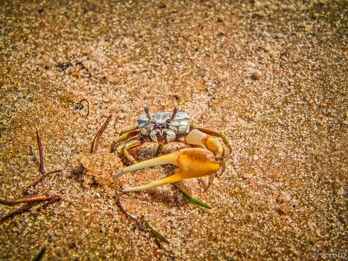 Interessante Fotos Von Punau  Brasilien