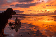 They don't care.... (izzy's-photos) Tags: sunset toby sky reflections lucy sand cairnterrier gordonsetter llanrhystud