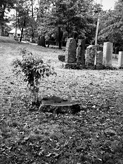 Death and Life (Roberto Novicini) Tags: nyc bw halloween landscape death scary cemetary halfframe olympuspen treestump sapling bw400cn olympuspend2 bwfp