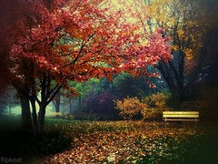 Autumn Serenade (flipkeat) Tags: park autumn red ontario canada fall nature beautiful leaves yellow bench landscape outdoors landscapes diffe