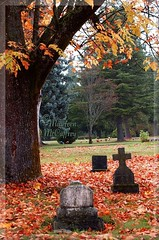 All Hallow's Eve (scribe13 ~ Maureen) Tags: autumn tree fall halloween cemetery grave graveyard leaves washington leaf cross headstone tomb tombstone foliage churchyard tacoma boneyard calvarycemetery gravemarker allhallowseve