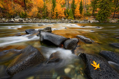 The Meaning Of Light (Aaron Reed Photography) Tags: autumn light motion fall rock contrast photography washington fallcolor photographyclass photographers workshop stockphotos rolling stockimages professionalphotography blackwhitephotography tumwater photographyschool fineartphotographs tumwatercanyon skyphotographs lakephotographs aaronreed naturephotographs washingtonoutdoors abstractphotographs landscapephotographs washingtonphotographer photographytraining framedartprints sunsetphotographs artphotographs sunrisephotographs aaronreedphotography surrealphotographs redphotographs waterphotographs colorfullandscapes cityscapephotographs cloudsphotographs washingtonphotography duskphotographs reflectionphotographs exposurenorthwest bluephotographs aaronreedphotographer landscapephotographygallery mountainsphotographs orangephotographs pavementphotographs whatislandscapephotography whatisstockphotography aaronreedart aaronreedprints aaronreednature aaronreedaluminumartprints yellowphotographs bridgephotographs buildingsphotographs twilightphotographs roadphotographs aaronreedmetalprints aaronreedacrylicfacemountprints