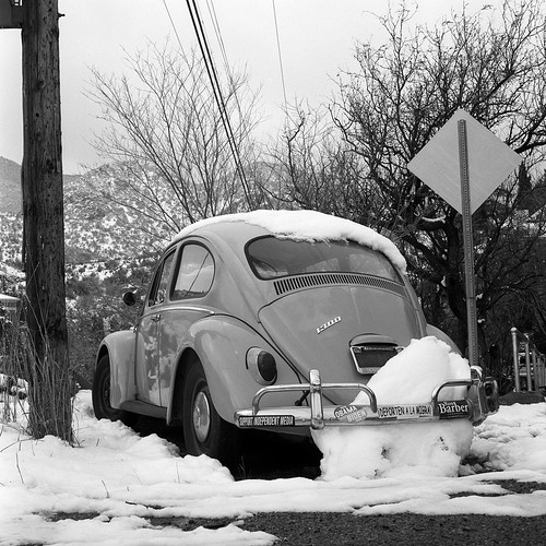 Snow Beetle