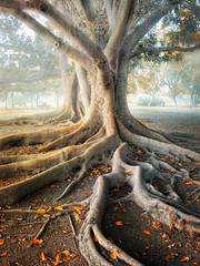 SuperTreeFlickr (Z Snchez) Tags: trees tree canon arbol sevilla arboles seville andalucia andalusia canoneos zu sevilha canoneos1000d zsnchez zusanchez