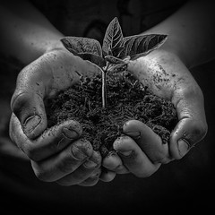 In Our Hands [Explored] (jellyfire) Tags: boy blackandwhite stilllife plant green nature ecology youth children mono holding hands gardening growth metaphor emotive seedling globalwarming nurturing newshoots economicgrowth consrvation