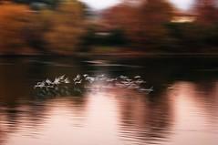 Evanescenze.. (fata_ci) Tags: fiume brivio evanescenze ysplix