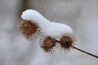Winter Cover