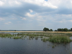 National Park De Hoge Veluwe (I chicchi) Tags: park parco lake holland nature lago natura olanda nationalparkdehogeveluwe