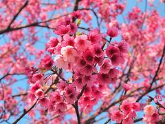 EP307675 (kongxupu) Tags: flower  hdr ep1