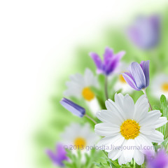Beautiful flower view (Oxana Denezhkina) Tags: flowers light sun sunlight white blur flower color macro green floral grass yellow closeup illustration daisies garden season outdoors leaf petals stem flora day natural many decorative background decoration meadow nobody romance ox petal clear medicine spa herb isolated tenderness blooming chamomile oxeye camomile camomiles chamomiles