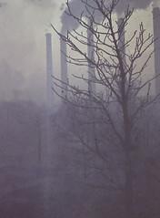 winter in dordrecht (16) (bertknot) Tags: winter dutchwinter dewinter winterinholland winterinthenetherlands dordrechtinwinter winterindordrecht hollandsewinter ouddordrecht winterindordrcht dordrechtvanvroeger dordrechtbefore1980 ouddordt dordrechtsverleden dordrechtindewinter winterinnederlanddutchwinter