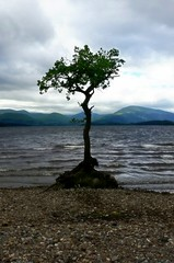Loneliness On The Loch (Michelle O'Connell Photography) Tags: balmaha millorchaybay lochlomond lonesometree scotland balmahascotland michelleoconnellphotography