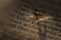 Three Wishes (Captured Heart) Tags: dandelionseeds dandelion wishes book poetry text words pages lightandshadows