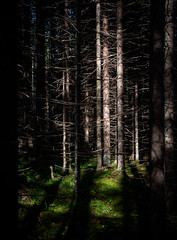 fir (miemo) Tags: repovedenkansallispuisto repovesi dark em5mkii europe finland fir forest kouvola nationalpark nature olympus olympus1240mmf28 omd shadows spruce summer sunlight trees