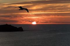 Sunset in Cornwall (konstantin oxy) Tags: himmel sonne sonnenuntergang meer mve rot gelb sky wolken sun sunset red yellow landschaft cornwall water wasser