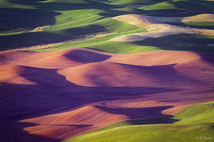 Palouse (Yan_Zhang) Tags: steptoe butte washington palouse wheat wave green abstract
