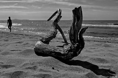 ....observing the sea (Marano Marco) Tags: marano maranomarco sea mare mareitalia toscana tuscany lemarze tronco spiaggia passeggiata walksea grosseto
