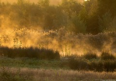 Lever du jour sur la campagne (jymandu) Tags: boisrivièrenaturearbresforêt soleil crépuscule