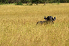 PWS_6706 (paulshaffner) Tags: dorobo safaris dorobosafaris serengeti safari studyabroad education abroad tanzania penn state pennstate biology pennstatebiology