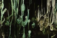 CRYSTAL GARDEN (kelemengabi) Tags: crystal garden silicate sodium glass nonlinear growing cymatics gabrielkelemen
