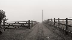 Fog on the line... (AJFpicturestore) Tags: drive farmlane gate fence fog mist monochrome blackwhite fencefriday hff alanfoster cornwall mawganinmeneage bunnell
