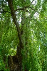 _DSC6808.jpg (camlaque) Tags: voyage canada 2016 montral arbre nature